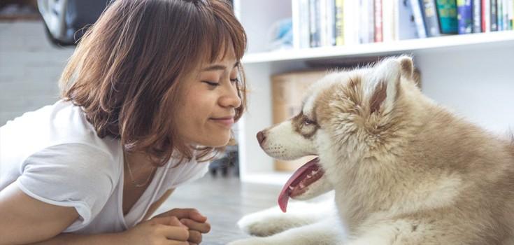 De leukste cadeaus voor jouw hond!